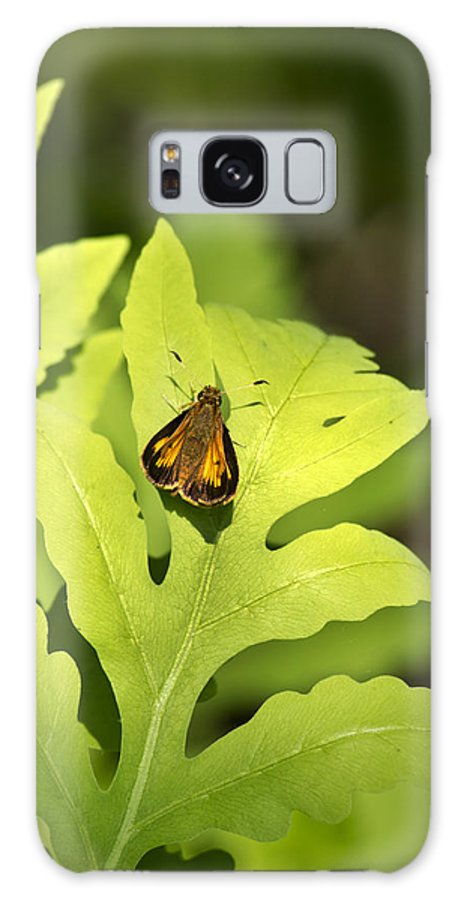 Butterfly Galaxy S8 Case featuring the photograph Delaware Skipper by Christina Rollo
