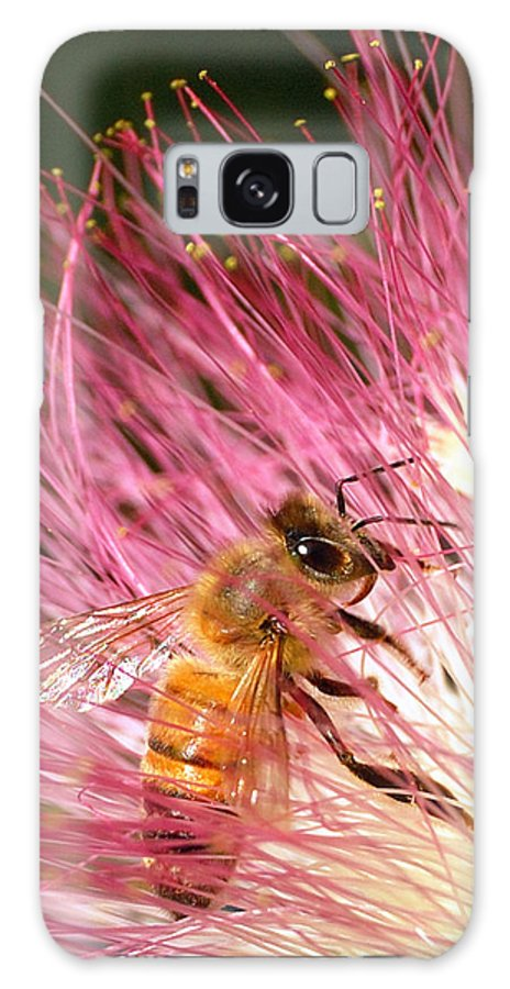 Honeybees Galaxy S8 Case featuring the photograph Delicate Embrace - Bee And Mimosa by Steven Milner