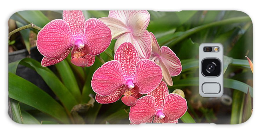 Orchids Galaxy S8 Case featuring the photograph Delightful Orchids by William Hallett
