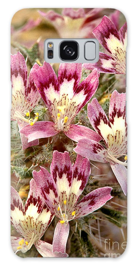 Desert Calico Galaxy S8 Case featuring the photograph Desert Calico Wildflowers by Dave Welling