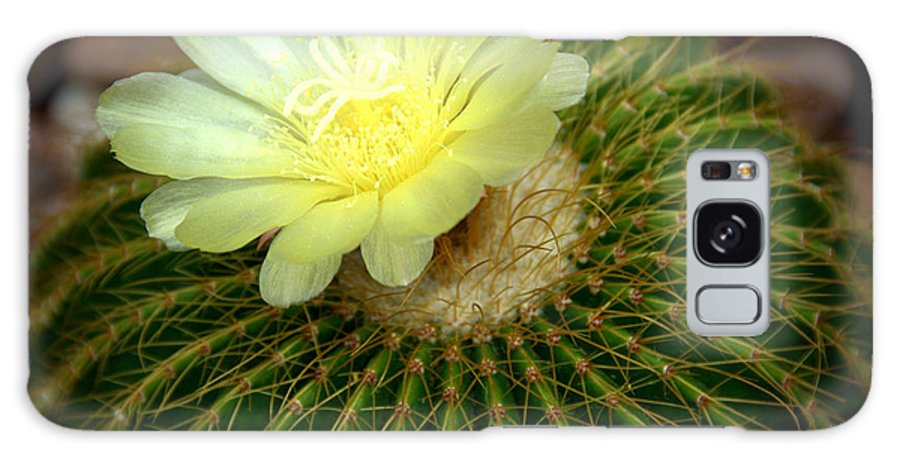 Nature Galaxy S8 Case featuring the photograph Desert Flower by Linda Tucker