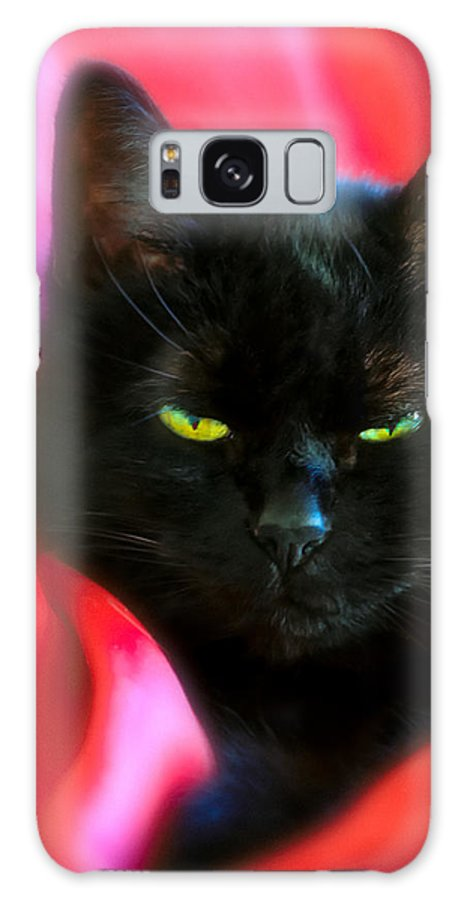 Black Cat Galaxy S8 Case featuring the photograph Devil In A Red Dress by Bob Orsillo