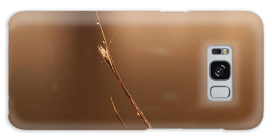 Sunrise Galaxy S8 Case featuring the photograph Dew Drops On A Twig by Roy Thoman