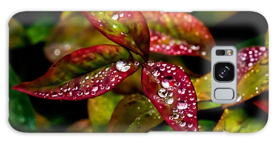 Dew Galaxy S8 Case featuring the photograph Dew On Autumn Leaves by Mick Anderson