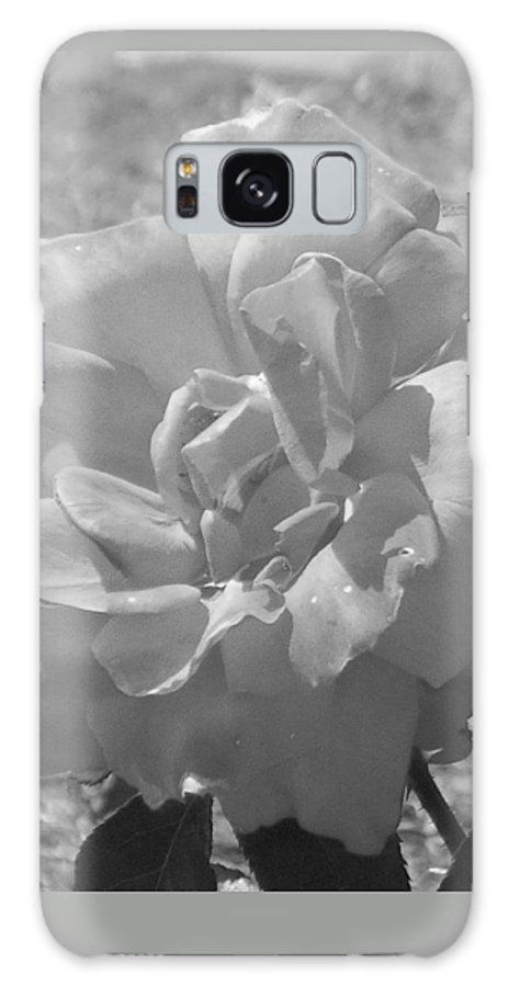 Rose Galaxy Case featuring the photograph Dew Rose by Pharris Art