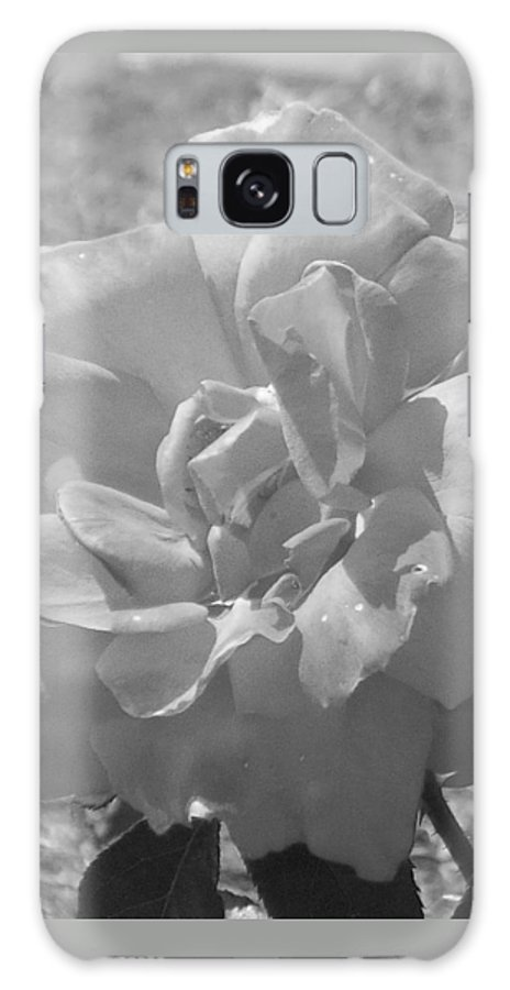 Rose Galaxy S8 Case featuring the photograph Dew Rose by Pharris Art