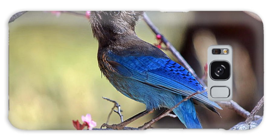 Stellers' Jay Galaxy S8 Case featuring the photograph Dining Out by Ron D Johnson