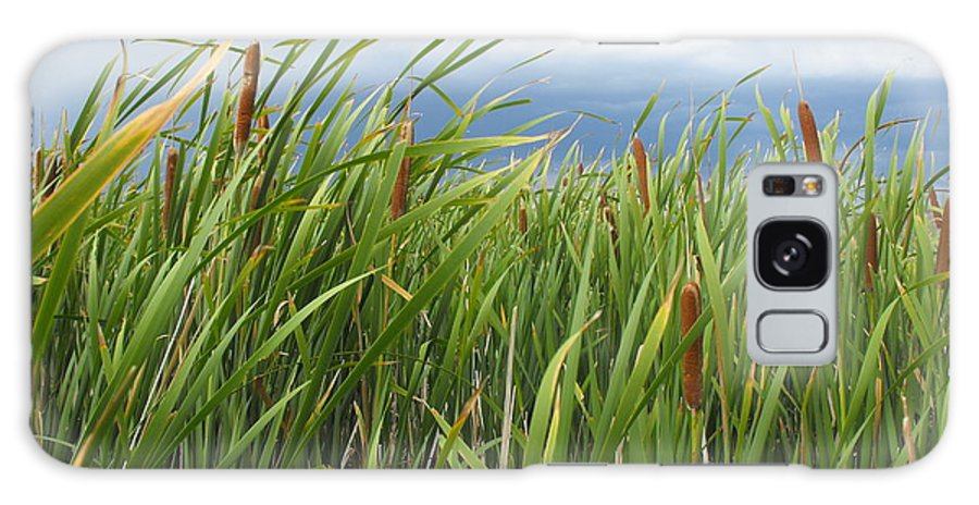 Cattails Galaxy S8 Case featuring the photograph Dobie Swamp Tails by Brandi Maher