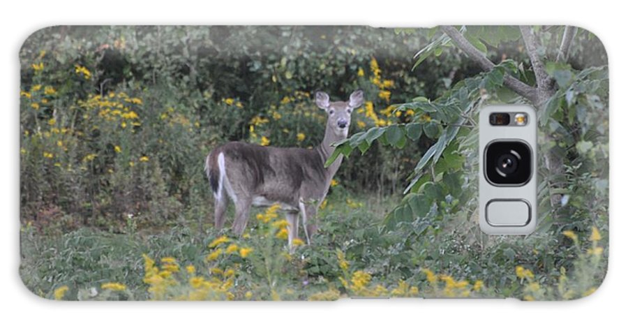 Doe Galaxy S8 Case featuring the photograph Doe by Sally Rice