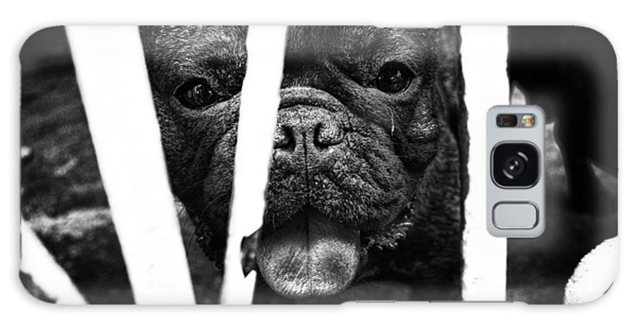 Dog Galaxy S8 Case featuring the photograph dog by Edward Chan