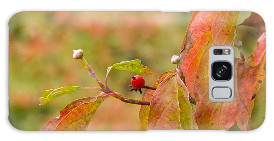 Berry Galaxy S8 Case featuring the photograph Dogwood Berrie by Nick Kirby