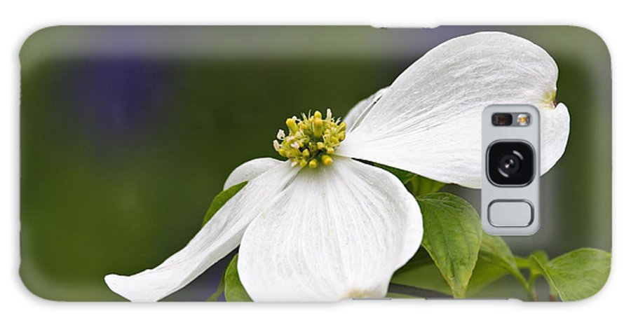 Eastern Galaxy S8 Case featuring the photograph Dogwood Blossom - D001797 by Daniel Dempster