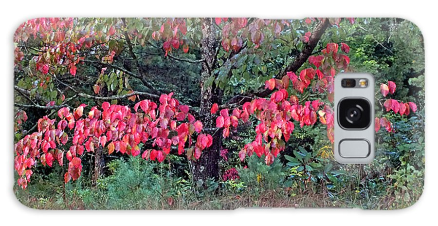 Duane Mccullough Galaxy S8 Case featuring the photograph Dogwood Leaves In The Fall by Duane McCullough