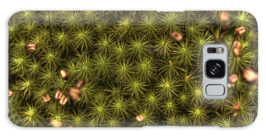 Ground Cover Galaxy S8 Case featuring the photograph Dolly Sods Carpet by Dan Friend