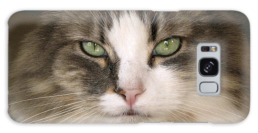 pussy band feline frau paul dean