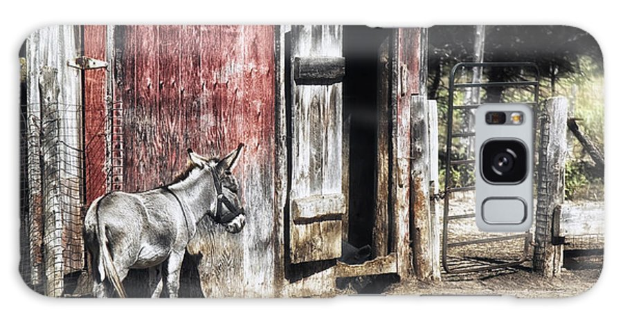 Donkey Galaxy S8 Case featuring the photograph Donkey by Melissa Connors