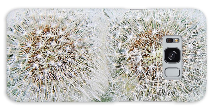 Double Dandelion Galaxy S8 Case featuring the photograph Double Dandelion Wishes by Barbara Griffin
