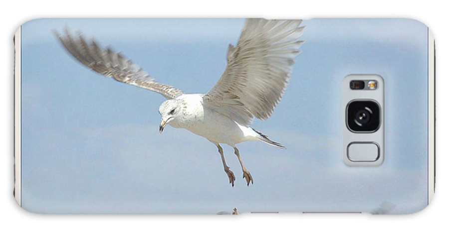 Seagulls Galaxy S8 Case featuring the photograph Double Decker 4 Framed by Fraida Gutovich