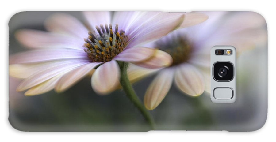 Bloom Galaxy S8 Case featuring the photograph Double Delight by David and Carol Kelly