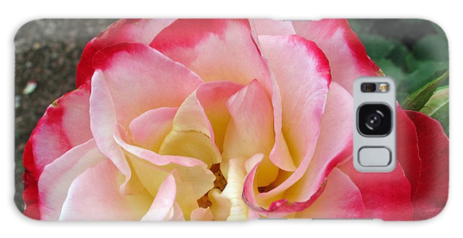 Floral Galaxy S8 Case featuring the photograph Double Delight Hybrid Tea Rose by Barbara McDevitt