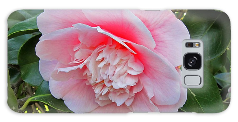 Flower Galaxy S8 Case featuring the photograph Double Pink Camilla Flower by Valerie Garner