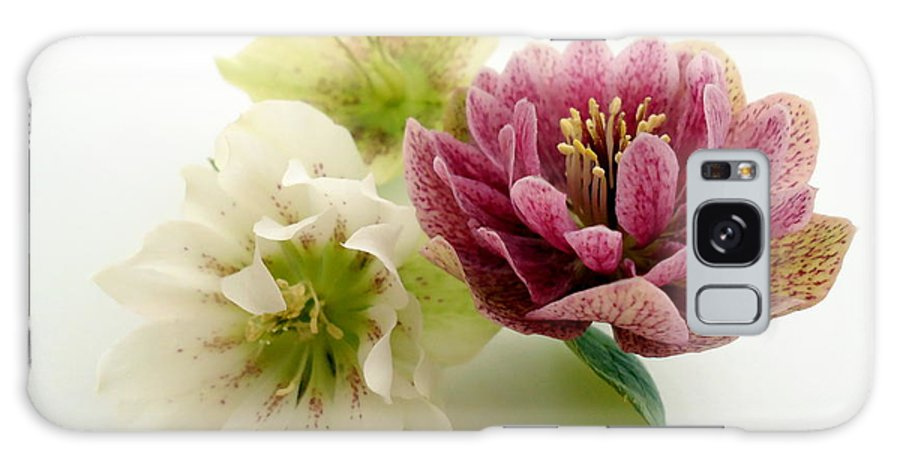 Hellebore Galaxy S8 Case featuring the photograph Hellebore by Phil Paynter