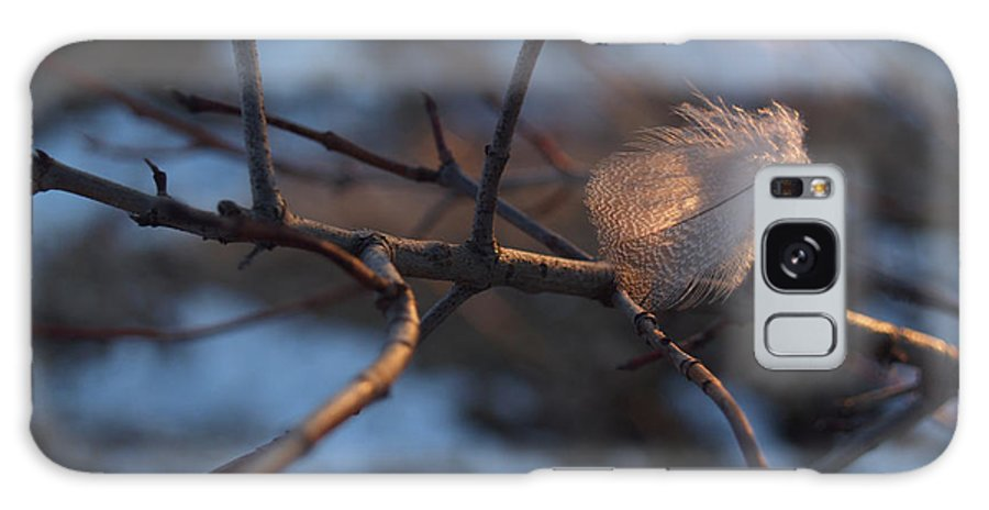 Branch Galaxy Case featuring the photograph Downy Feather Backlit On Wintry Branch At Twilight by Anna Lisa Yoder