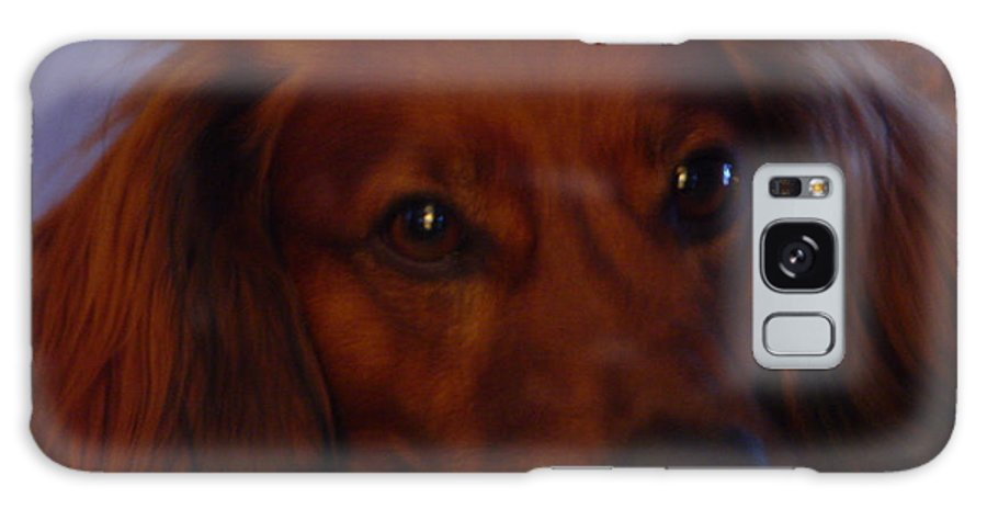 Dog Galaxy S8 Case featuring the photograph Doxie by Nancie Johnson