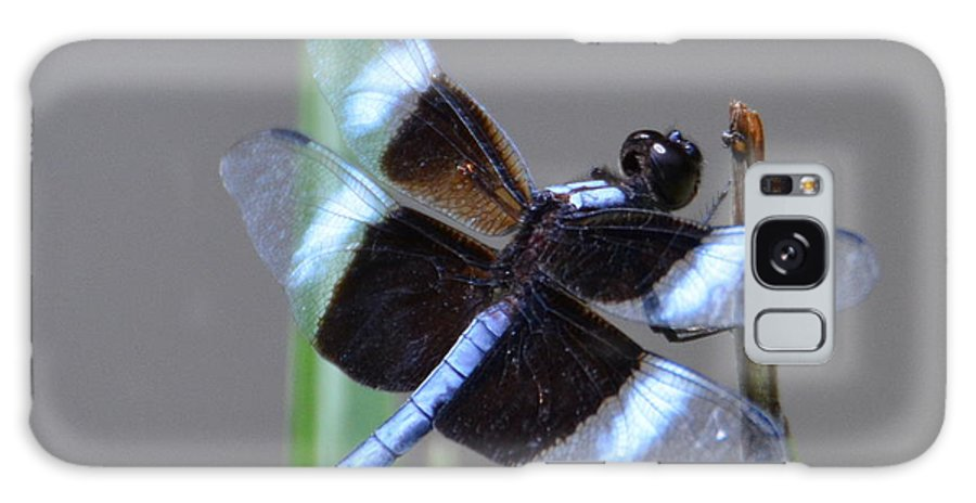 Dragon Fly Galaxy S8 Case featuring the photograph Dragon Fly by Dave Wangsness