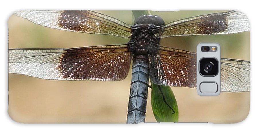 Dragonfly Galaxy S8 Case featuring the photograph Dragonfly In Summer by Rebecca Overton