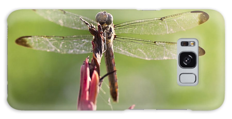 Dragonfly Galaxy S8 Case featuring the photograph Dragonfly Macro On Top Of A Flowering Plant by Brandon Alms