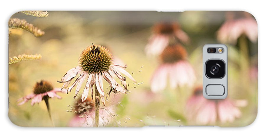 Coneflower Galaxy S8 Case featuring the photograph Dreamy Coneflowers by Mary Smyth
