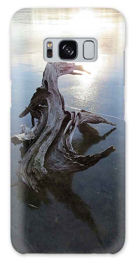 Wildlife Galaxy S8 Case featuring the photograph Driftwood Lizard On Ice by Richard Griffis