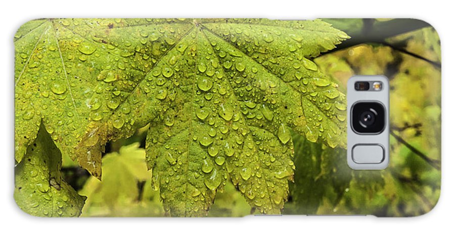 Autumn Galaxy S8 Case featuring the photograph Dripping Vine Maple by Curtis Knight
