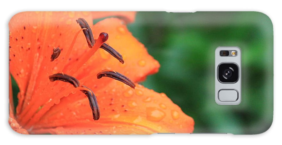 Orange Galaxy S8 Case featuring the photograph Droplets On Tiger Lily by Jennifer E Doll
