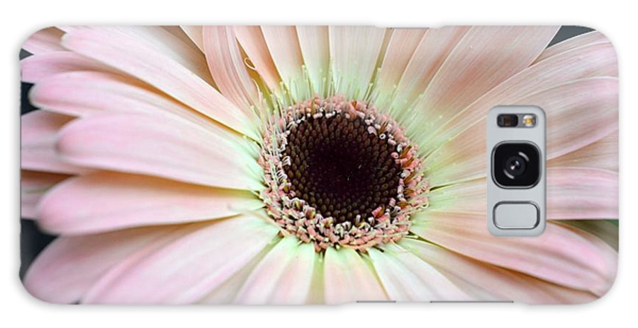 Gerber Galaxy S8 Case featuring the photograph Dsc0059d1 by Kimberlie Gerner