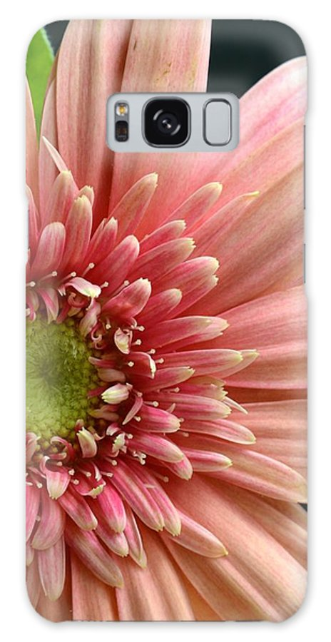 Gerber Galaxy S8 Case featuring the photograph Dsc250d-003 by Kimberlie Gerner