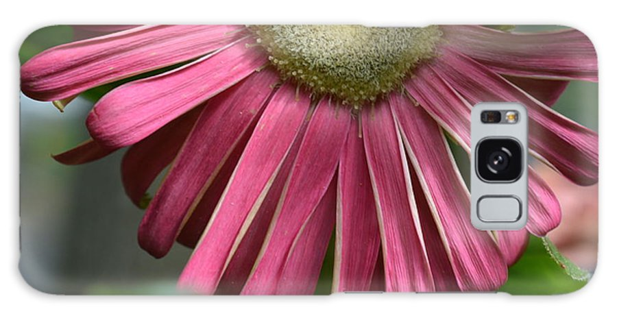 Gerber Galaxy S8 Case featuring the photograph Dsc303-002 by Kimberlie Gerner