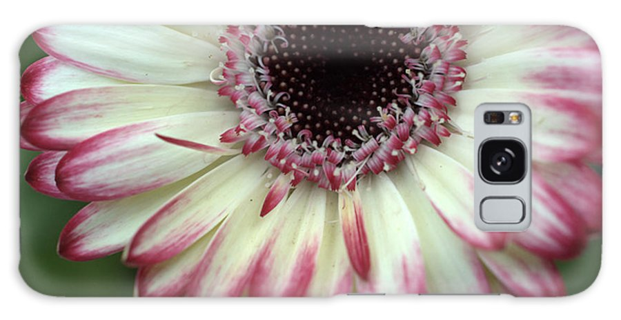 Gerber Galaxy S8 Case featuring the photograph Dsc339-001 by Kimberlie Gerner
