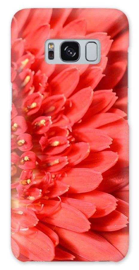 Gerber Galaxy S8 Case featuring the photograph Dsc359d-001 by Kimberlie Gerner