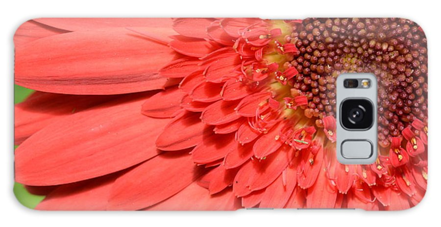 Gerber Galaxy S8 Case featuring the photograph Dsc361-001 by Kimberlie Gerner