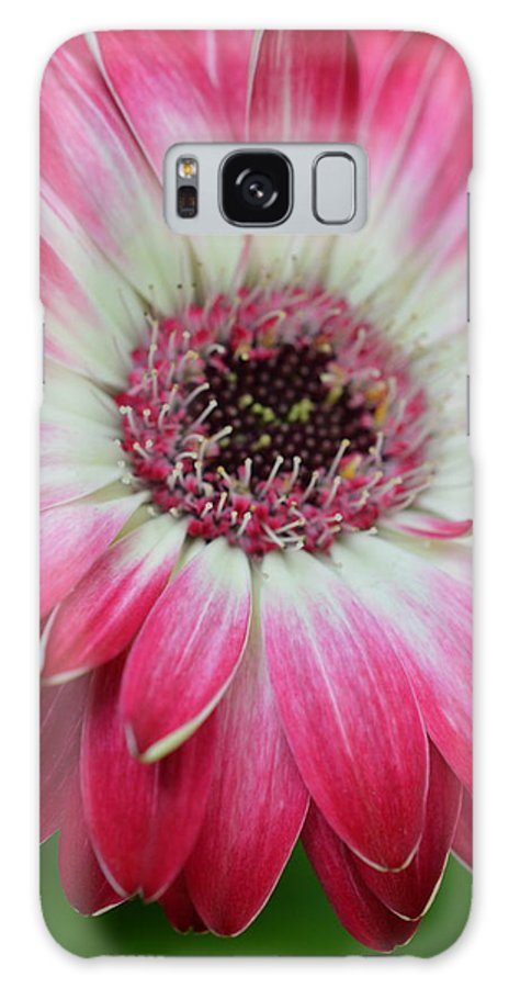 Gerber Galaxy S8 Case featuring the photograph Dsc413-001 by Kimberlie Gerner