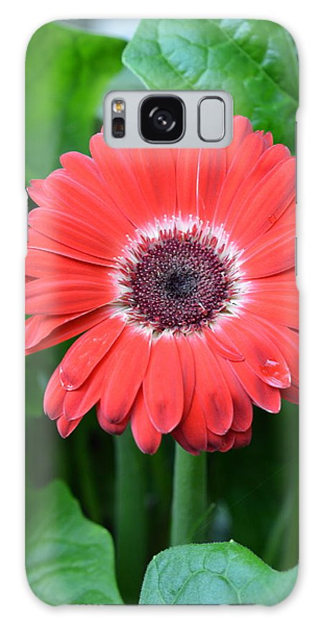 Gerber Galaxy S8 Case featuring the photograph Dsc457-001 by Kimberlie Gerner