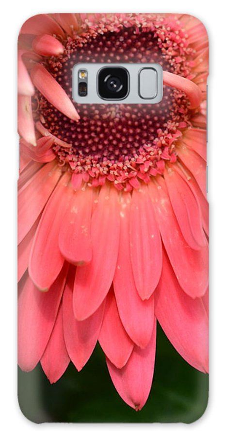 Gerber Galaxy S8 Case featuring the photograph Dsc472-001 by Kimberlie Gerner