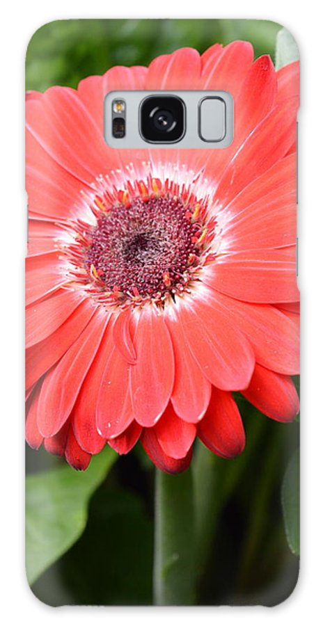 Gerber Galaxy S8 Case featuring the photograph Dsc524-001 by Kimberlie Gerner
