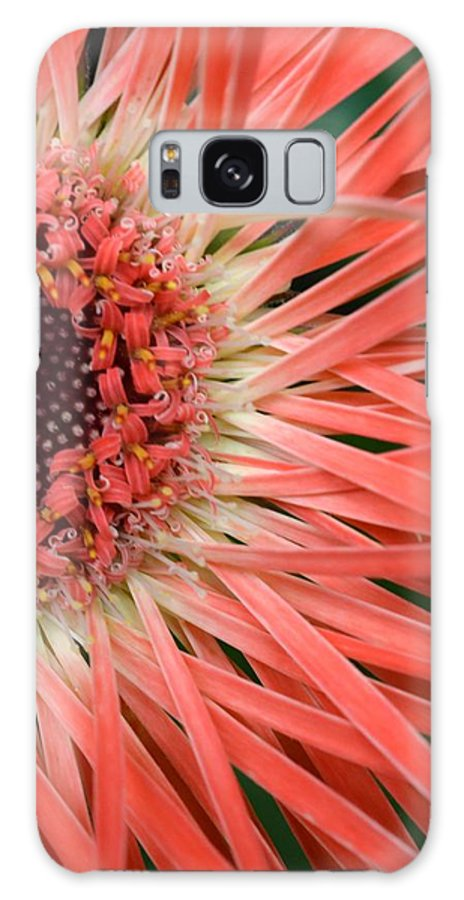 Gerber Galaxy S8 Case featuring the photograph Dsc919d1-001 by Kimberlie Gerner