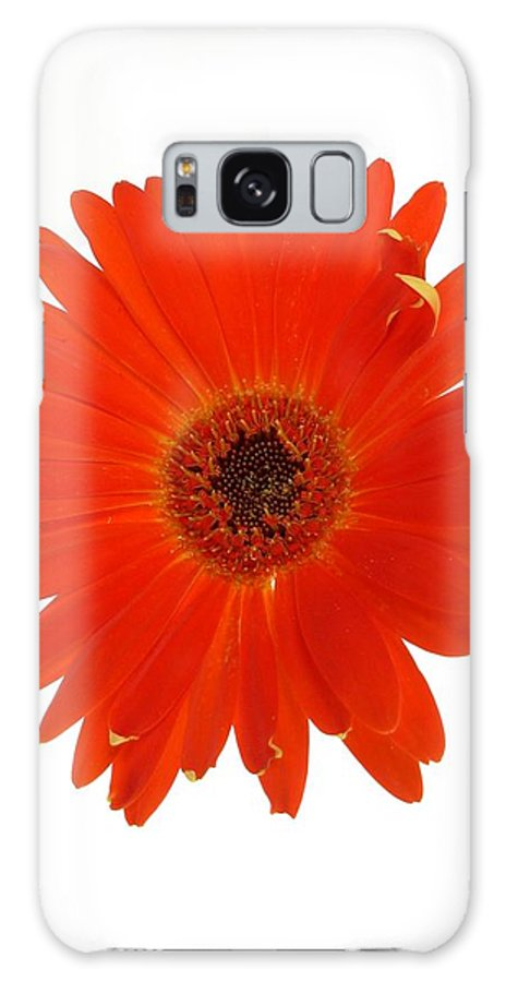 Gerber Galaxy S8 Case featuring the photograph Dscn2651d2 by Kimberlie Gerner