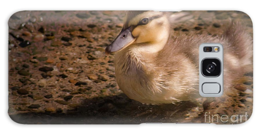 Duck Galaxy S8 Case featuring the photograph Duckling by Andrea Goodrich
