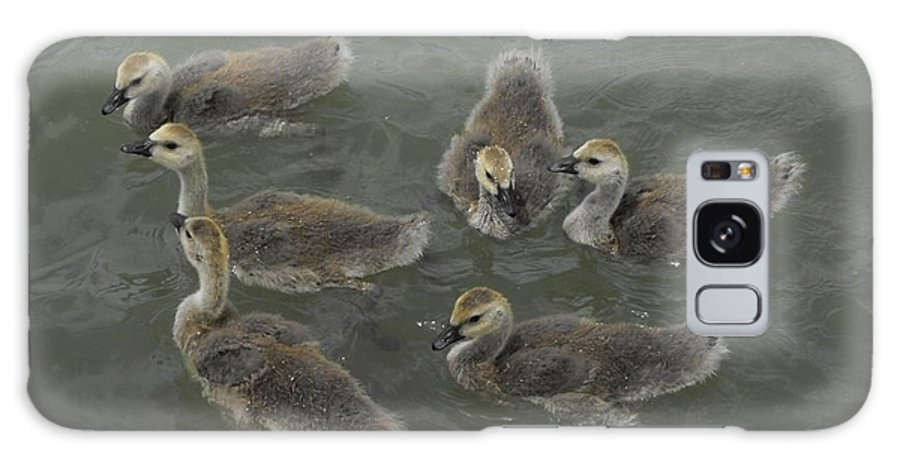Ducks Galaxy S8 Case featuring the photograph Ducklings by Brandi Maher