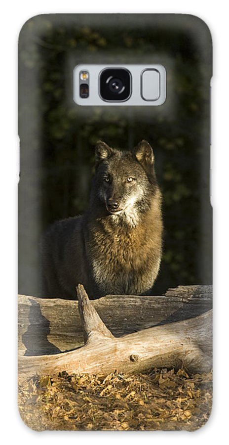 Wolf Galaxy S8 Case featuring the photograph Dusk by Jack Milchanowski